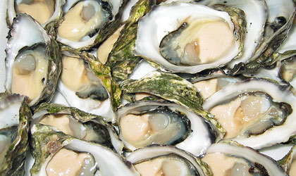 learn how to pair freshly shucked oysters with wine